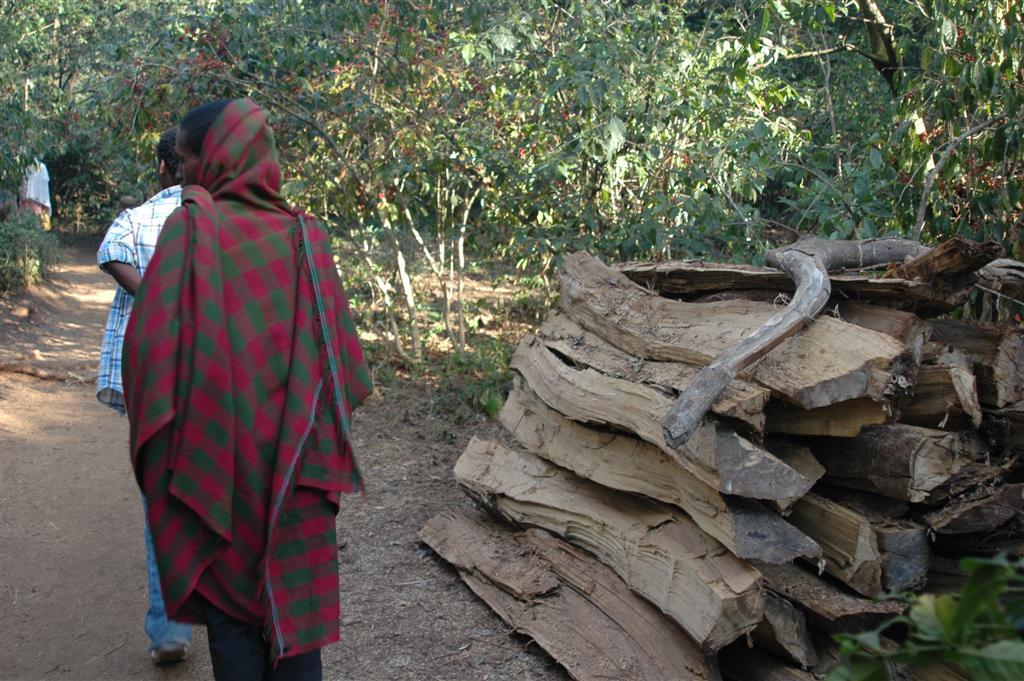 050._Illegal_harvesting_of_timber.JPG