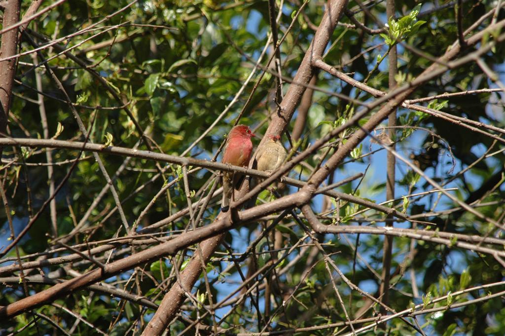055._sunbirds.JPG