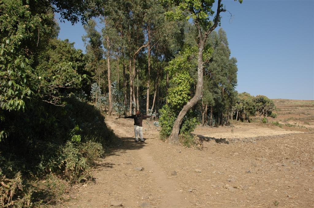 135._Church_forest_boundary.JPG