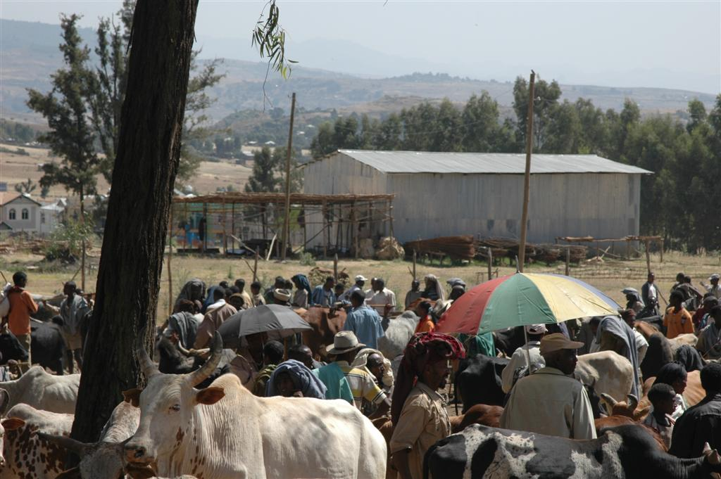 180._Cattle_sale_in_Gondar_next_to_our_Ezana_Pension.JPG