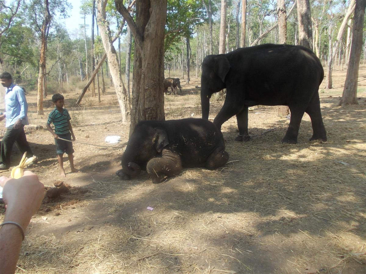 a-child-playes-with-the-elephanats