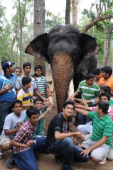 eephant-with-students