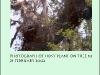 tree10bp.jpg