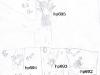 tree04-mar-2003.jpg