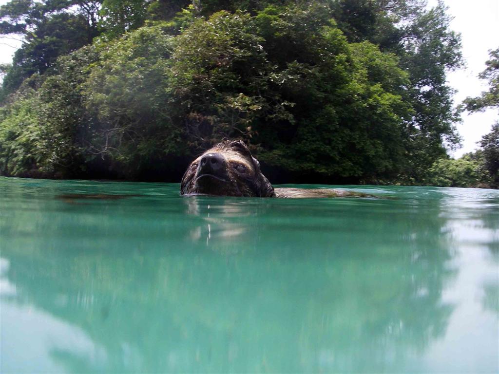 slothswim2small