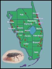 map-weevil-2