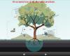 Draft Porposal for Alternative Practicum Canopy Climb