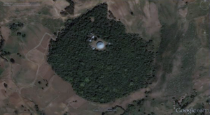 ethiopian-church-forest-google-earth