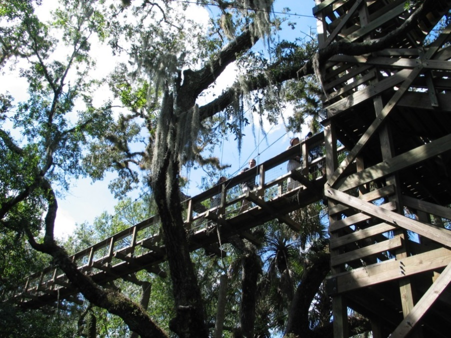 Figure 2 (right). Canopy walkway with poles at Myakka State Park, Florida