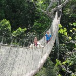 Figure 3 (left). Canopy walkway with tree support in Amazonian Peru