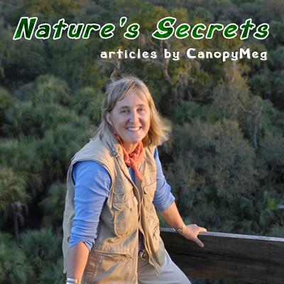 natures-secrets-by-canopymeg