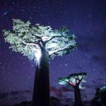 trees-at-night