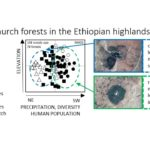 church-forests-in-the-ethiopian-highlands