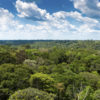 Study: Carbon-Hungry Plants Impede Growth Rate of Atmospheric CO2